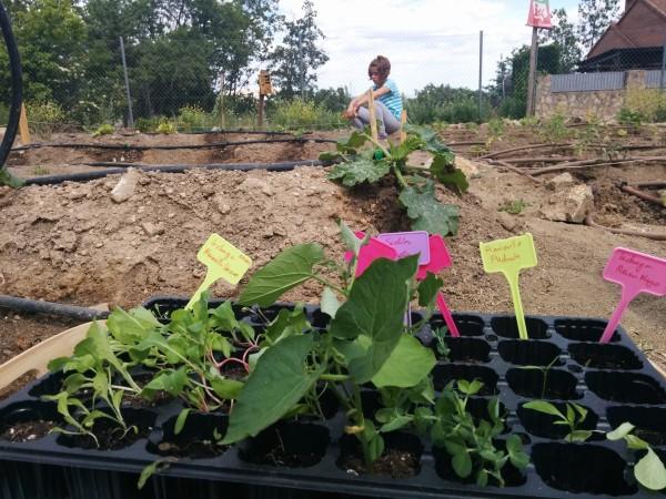 Plantones al huerto