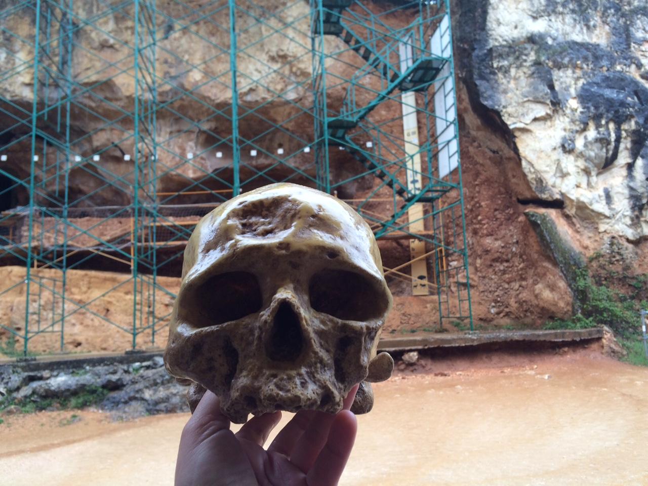 Cráneo de Antecessor en los yacimientos de Atapuerca (Burgos)