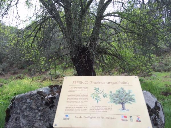 Senda ecológica del río Perales (Navalagamella-Madrid)