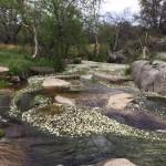 Río Perales con un manto de florecillas blancas