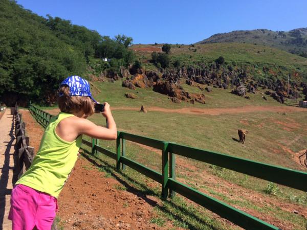 Recinto de los elefantes en Cabárceno (Cantabria)