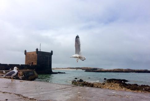 Las gaviotas son las protagonistas de Essaouira (Marruecos)