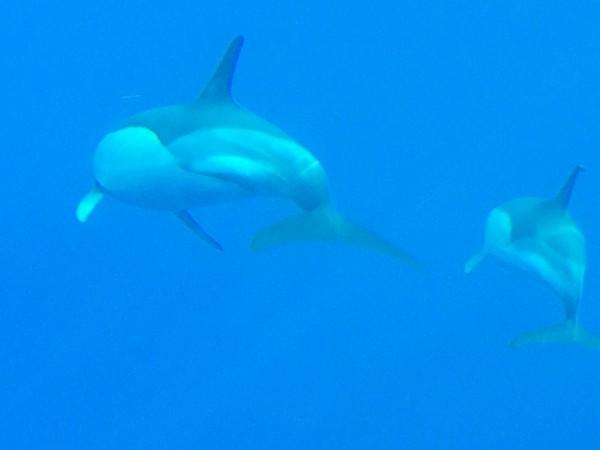 Mamá y bebé delfín