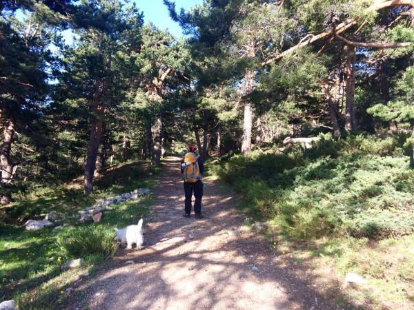 Ascenso entre árboles a Siete Picos