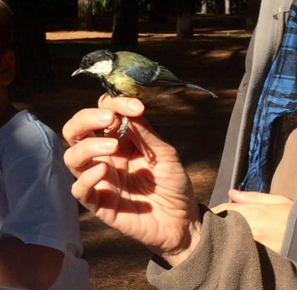 Analizando las plumas y la envergadura de cada pájaro