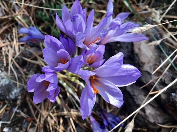 Flores salvajes en la ruta