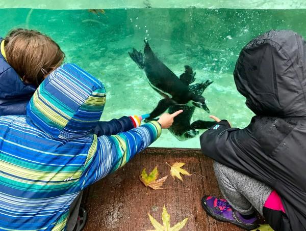 Con los pingüinos del Zoo de Londres