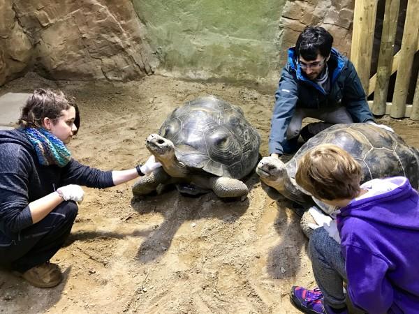 Acariciando a las tortugas