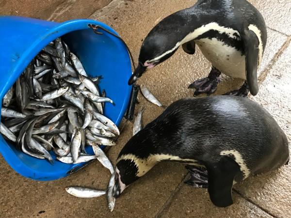 Flipando con lo suavecitos que son los pingüinos