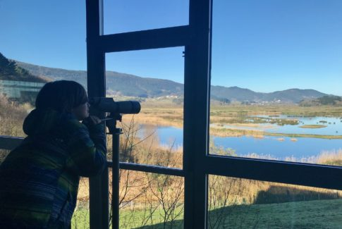 Observando aves en el Urdaibai Bird Center
