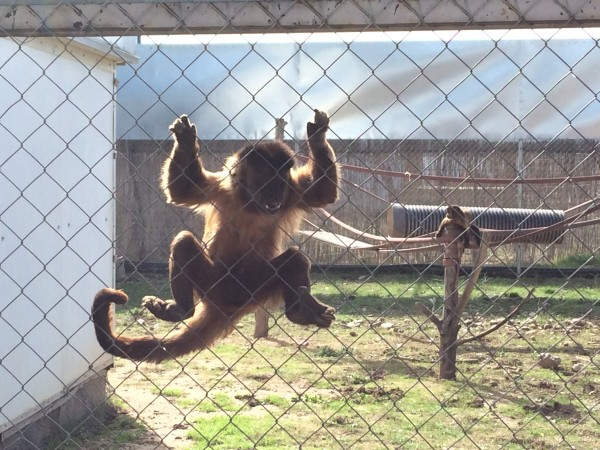 Centro de rescate de primates Rainfer
