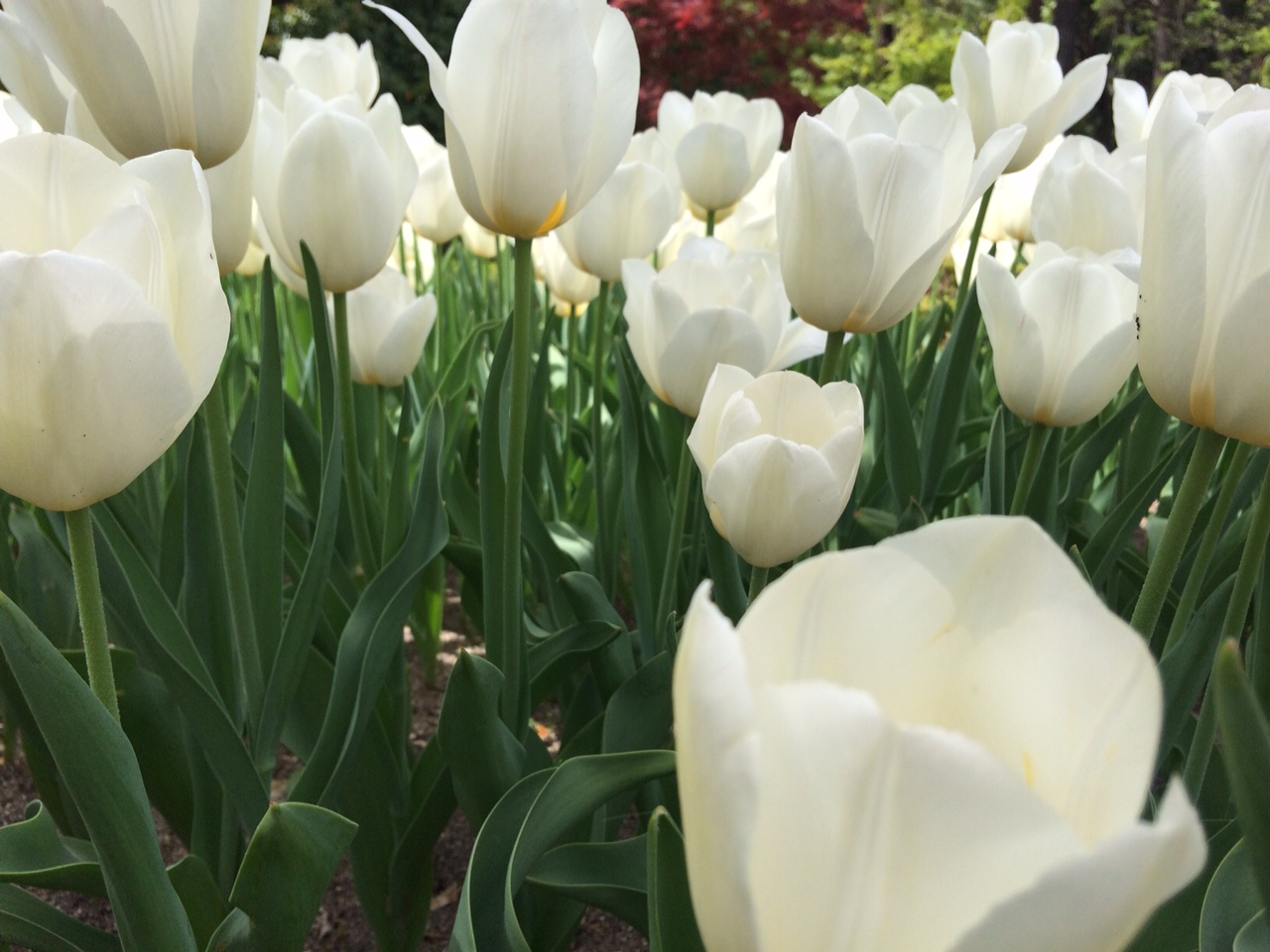 Jardín botánico de Madrid en primavera