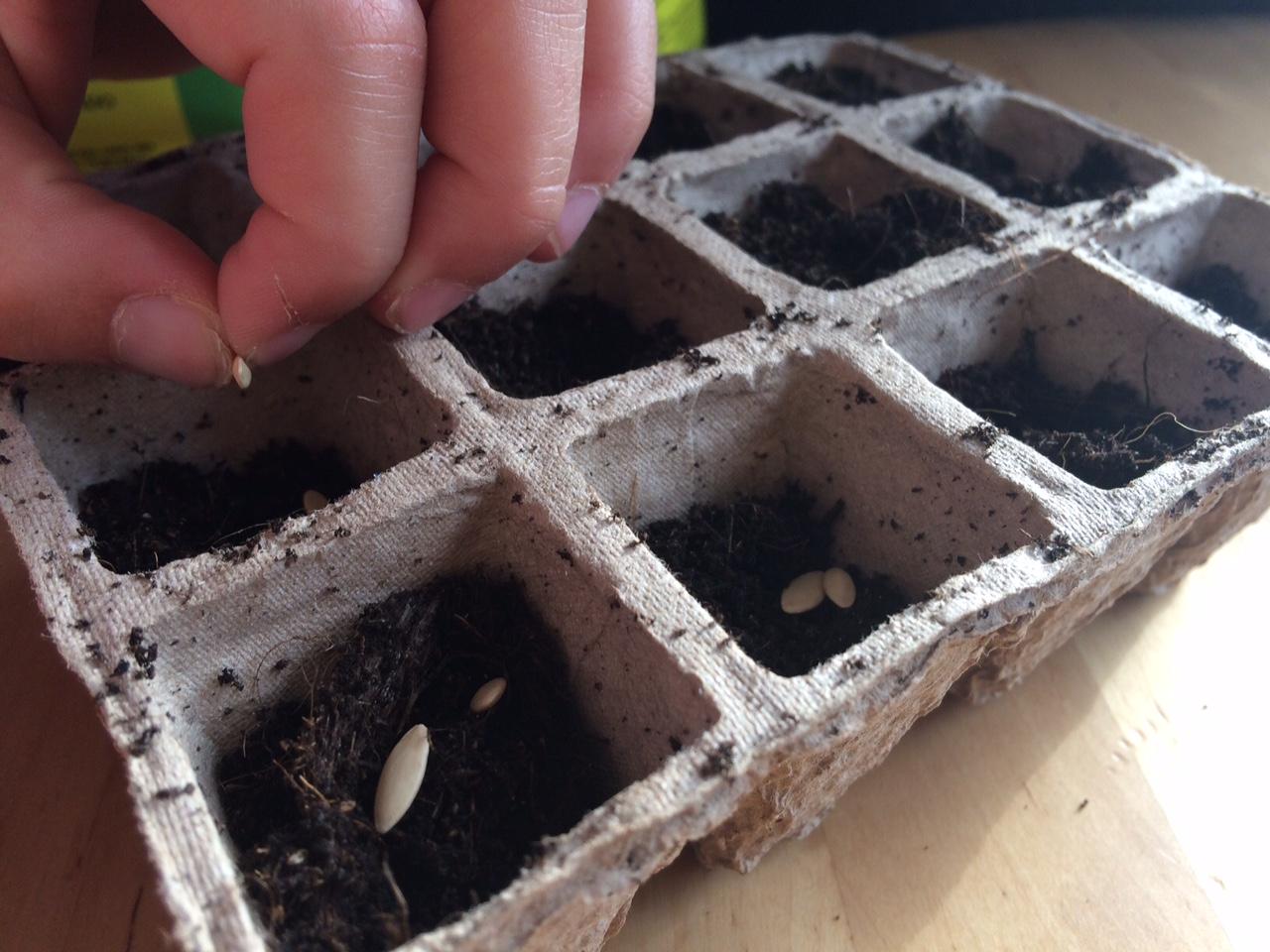 Echando las semillas en la tierra