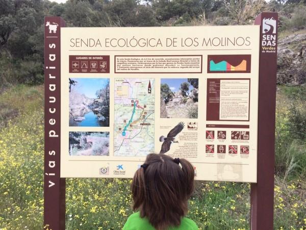 Panel explicativo de la senda del ecológica de los molinos del río Perales. Navalagamella (madrid)