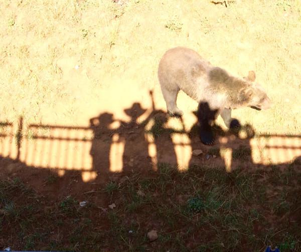 Viendo a los osos en el Parque de Cabárceno.