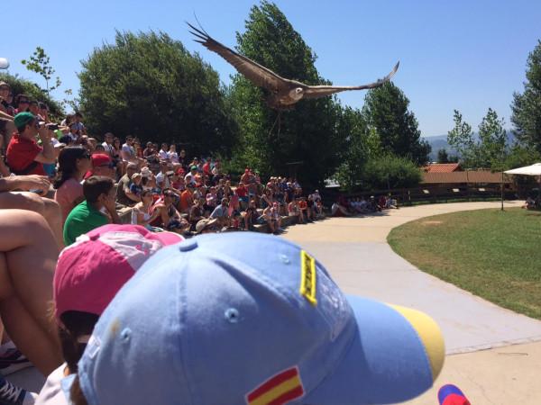 Exhibición de aves rapaces en Cabárceno (Cantabria)