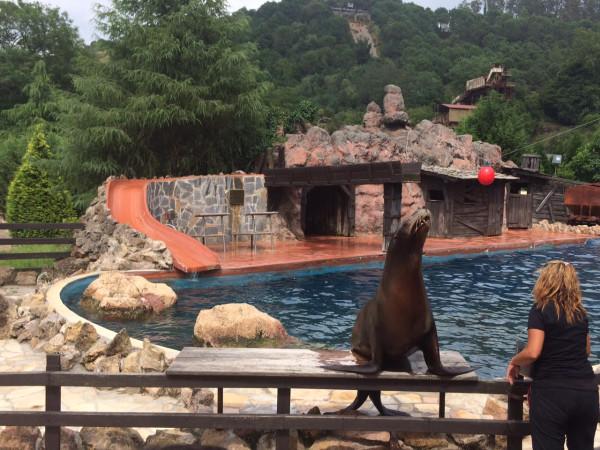 Exhibición de leones marinos en Cabárceno (Cantabria)