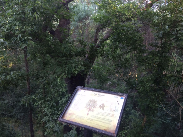 Carteles indicativos de la senda botánica en El Pardo (Madrid)
