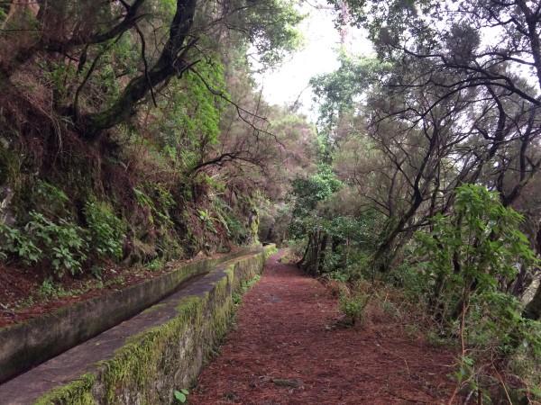 Ruta de Marcos y Cordero en La Palma