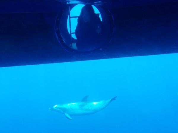 Delfines desde el barco de observación de cetáceos
