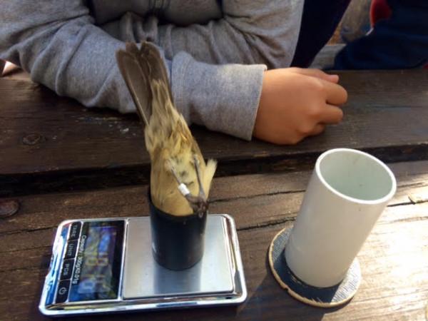 Los pájaros se pesan en galletas y así con el culo en pompa. :-)