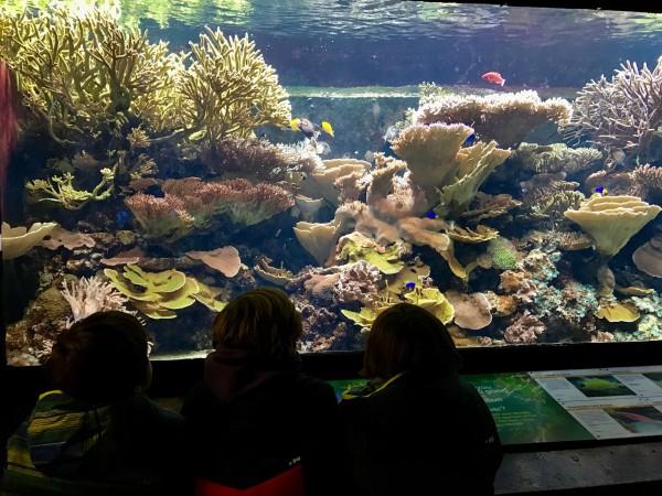 El acuario del zoo es impresionante