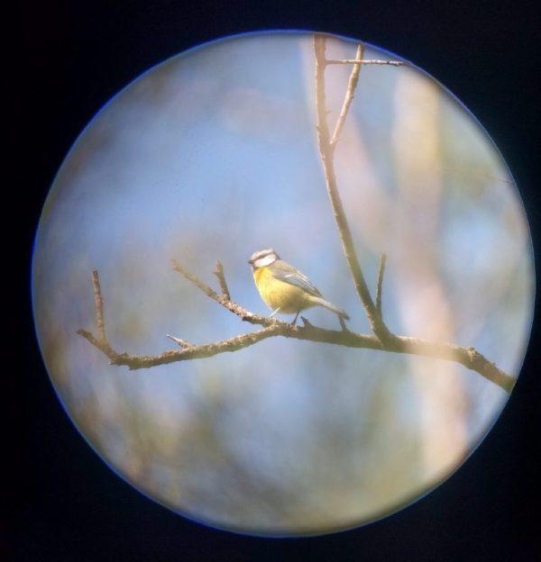 Pájaro en las Tablas de Daimiel